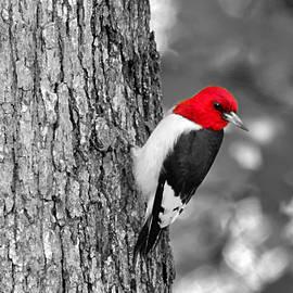 Red Head by Carmen Macuga