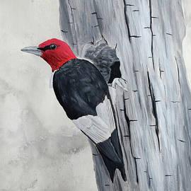 Red Headed Woodpecker by Brady Nielson