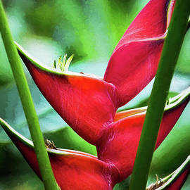 Red Heliconia Bihai  by Sharon McConnell