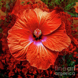 Red Hibiscus Flower by Anthony Ellis