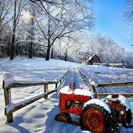 Red in the Snow by Debra and Dave Vanderlaan