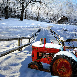 Red in the Snowy Landscape by Debra and Dave Vanderlaan