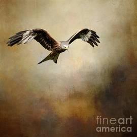 Red Kite in Flight by Eva Lechner