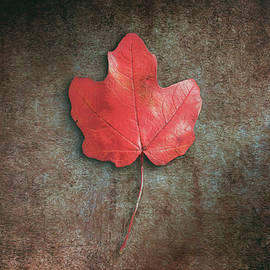 Red Leaf by Scott Norris