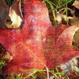Red Leaf with Textures by Bill Tincher