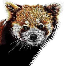 Red panda illustration by Loren Dowding