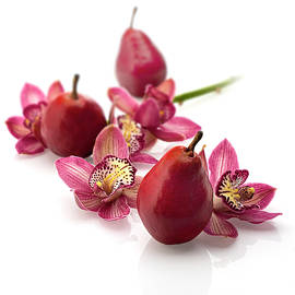 Red Pears and Cymbidium Orchids by Lily Malor