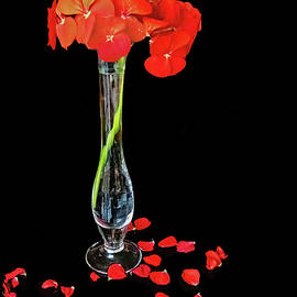 Red Petals by Ira Marcus