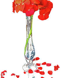 Red Petals on White by Ira Marcus