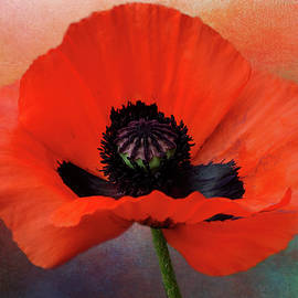 Red Poppy Painterly by Isabela and Skender Cocoli