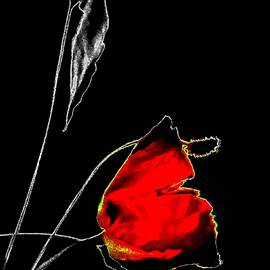 RED ROSE - selective color on black by VIVA Anderson