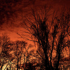Red Sky In Morning by Denise Harty