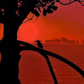 Red Sunset Kingfisher And Mangrove Silhouette by Joan Stratton by Joan Stratton