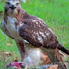 Red-Tailed And Prey  by Tami Quigley