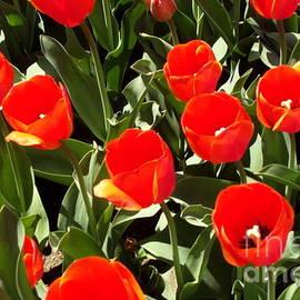 Red Tulips 2nd by Johanna Zettler