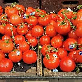 Red Vine Tomatoes by Charlotte Gray