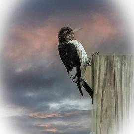 Redheaded Woodpecker by Gary Shindelbower