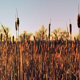 Reeds with Golden Light