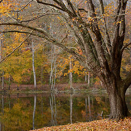 Reflection of Autumn by Dianne Sherrill