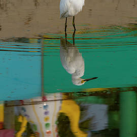 Reflection with Snowy Egret 09/12 by Bruce Frye