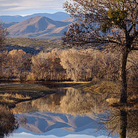 Reflections at Bosque del Apache by Mary Lee Dereske