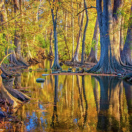 Reflections of Gold at Cibolo Nature Center by Lynn Bauer