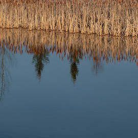 Reflections On A Wetland Lake by Karen Rispin