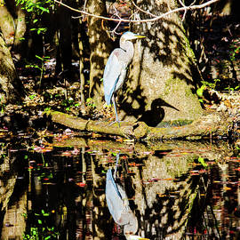 Reflections  by Sue Benden