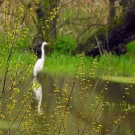 Reflective Egret by Carmen Macuga