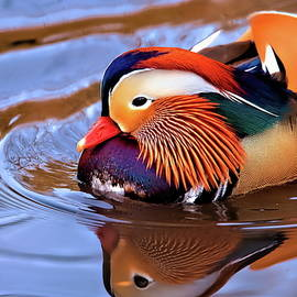 Refletions of a mandarin duck in central park NYC by Geraldine Scull