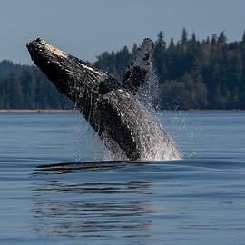 Rejoice - Whale Art by Jordan Blackstone