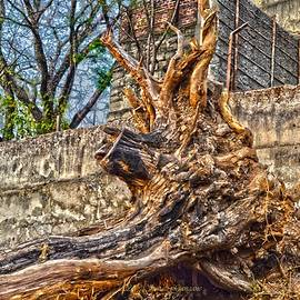 Remains of dried tree by Sonali Gangane