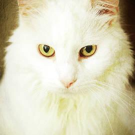 Renaissance Cat by Tina Uihlein