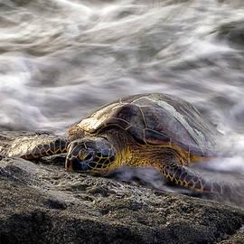 Resting Honu by Christopher Johnson