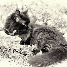 Resting In The Garden by Theresa Campbell