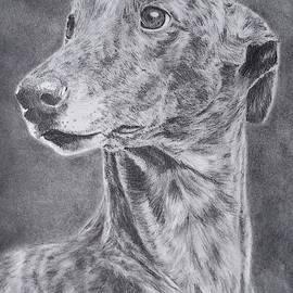 Retired Greyhound by Gary Fiore