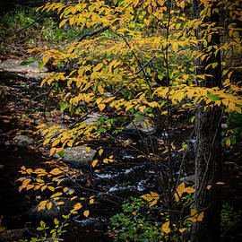 Ridley Creek State Park-Autumn Leaved Trees by Judy Wolinsky