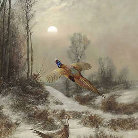 Ring-necked Pheasants at Sunset by Spadecaller