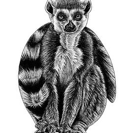 Ring-tailed lemur by Loren Dowding