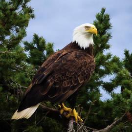 Rise Above - Eagle Art by Jordan Blackstone