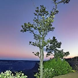 Rising Moon Over 'Ohi'a Lehua by Heidi Fickinger
