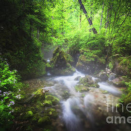 River flowing through enchanted green forest by Patrik Lovrin