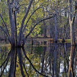 River Trees III by Allen Beatty