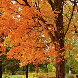 Riverside Park in October by Maria Keady