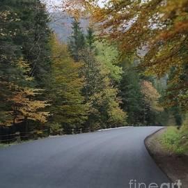 Road by Julia Bernardes