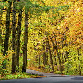 Road to Fall Colors by Sebastian Musial
