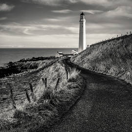 Road to Scurdie Ness by Dave Bowman