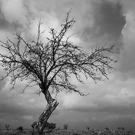 Roadside tree by Martin Vorel Minimalist Photography