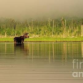 Roaming Among the Fog - Moose - Allagash by Jan Mulherin