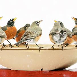 Robin Convention by Judi Dressler